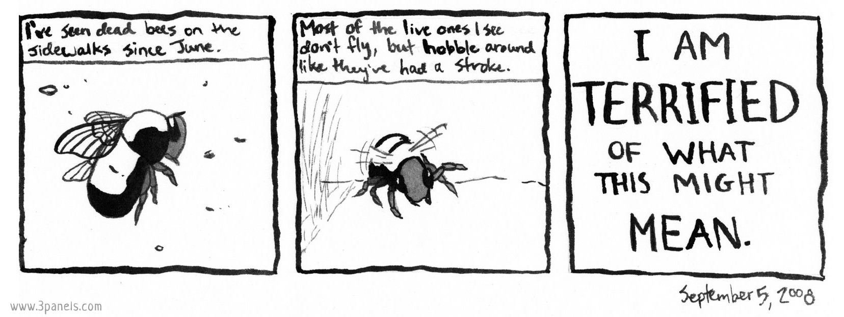 Panel 1 image: a dead bumblebee on a sidewalk. Panel 1 text: I've seen dead bees on the sidewalks since June. Panel 2 image: a live bumblebee stumbling on the ground, flapping its wings. Panel 2 text: Most of the live ones I see don't fly, but hobble around like they've had a stroke. Panel 3 text (no image): I am terrified of what this might mean.